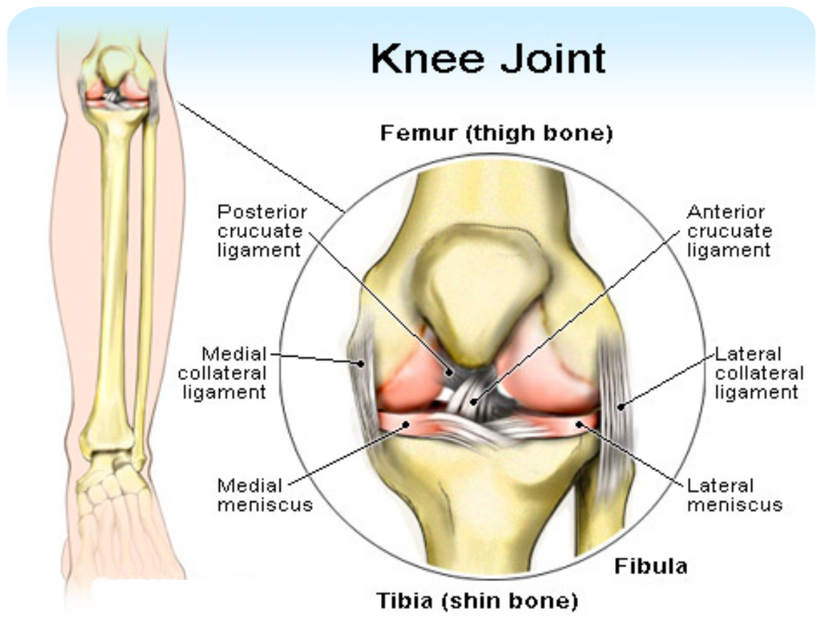 Cipro and knee infections